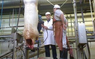 Разработка технологии и переработке мясного сырья мяса кастрированных свинок