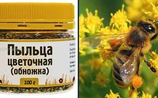 Что лечит пчелиная пыльца