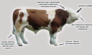 Состав мяса мясных пород коров