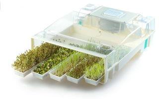 Разработка усовершенствованной технологии  проращивания семян сельхозкультур