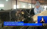Определение токсичности кормов как факторуспешного развития животноводства