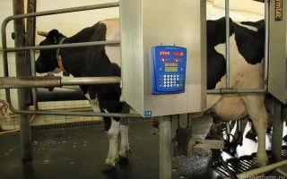 Влияние селена на удои и качество молока коров