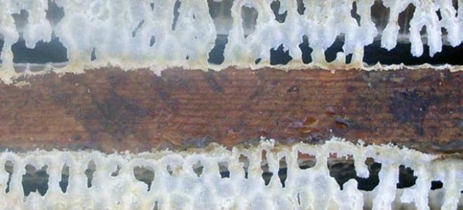 Пчелиный воск — полезный продукт