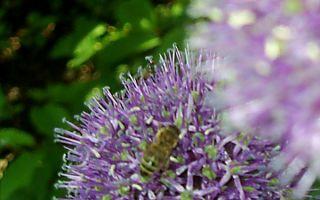 Химический состав и физические свойства цветочного меда