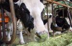 Продуктивные качества коров-долгожительниц
