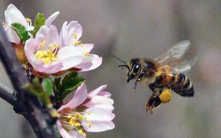 Дождь и холод не помеха пчелам Татарстана