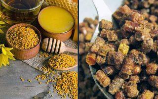 Лечебные свойства пчелиной перги