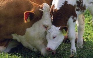 Прогнозирование продуктивности коров