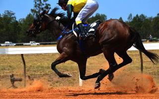 Породы лошадей с фото и описанием