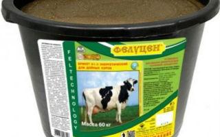 Влияние концентрата  «Золотой Фелуцен» на обмен белка у бычков