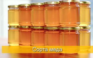 Характеристика видов и сортов меда