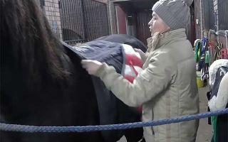 Правила седловки лошади