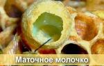 Чем полезно пчелиное маточное молочко