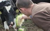 Скармливание подсолнечного шрота разнымвидам сельскохозяйственных животных