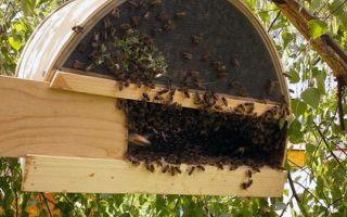 Как размножаются пчёлы?