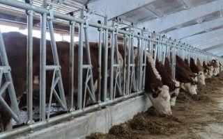 Влияние технологии содержания бычков на убойные показатели