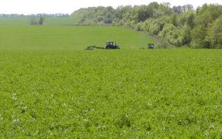 Выращивание люцерны на корм