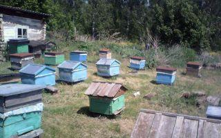 Пчеловодство: основы работы на пасеке