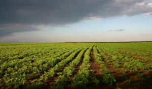 - Продуктивность склоновых агроландшафтов  в зоне каштановых почв - zemledelie