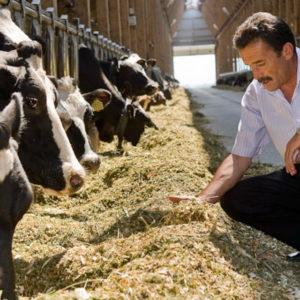 - Скармливание подсолнечного шрота разнымвидам сельскохозяйственных животных - kormlenie