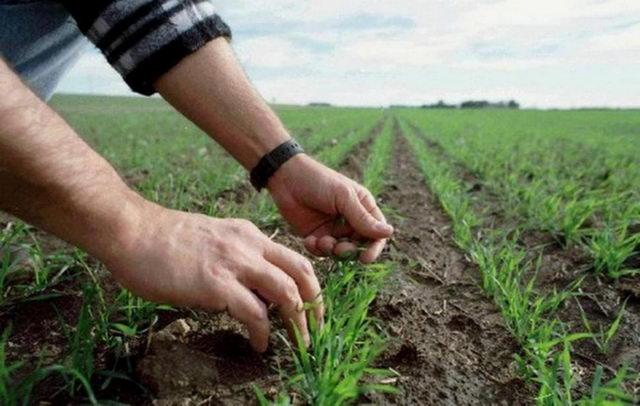 - Фермерские хозяйства России: настоящее и будущее - fermerstvo