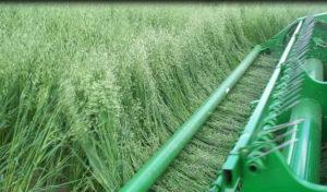 - Выращивание люцерны на корм - rastenievodstvo