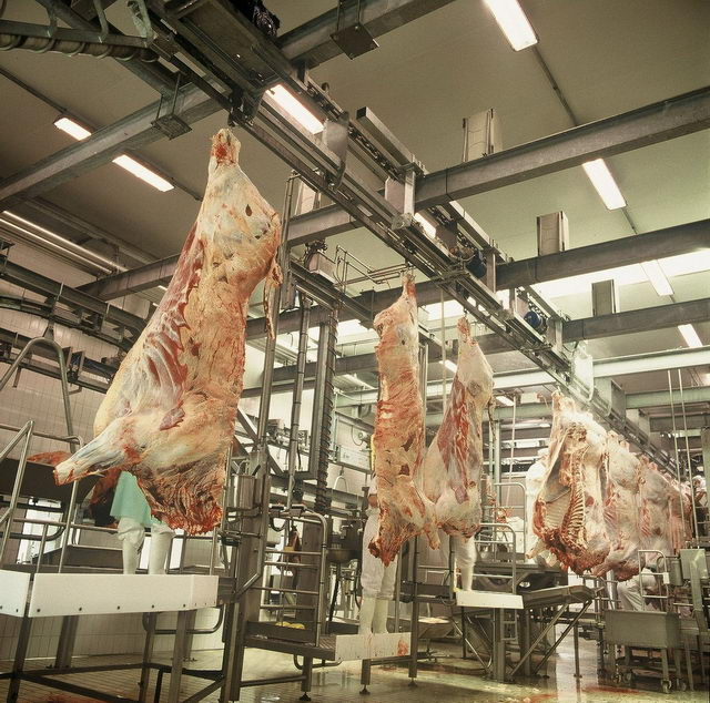 - Разработка технологии и переработке мясного сырья мяса кастрированных свинок - myaso