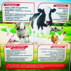 Кролики - Влияние премиксов «Протодарвит и «Протосельвит»  в рационах кроликов на мясную продуктивность - kormlenie