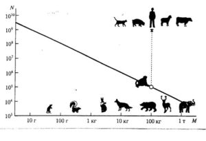 Коровы - Сравнительные данные продуктивности  животных разных селекций - razvedenie