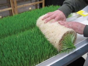- Разработка усовершенствованной технологии  проращивания семян сельхозкультур - rastenievodstvo
