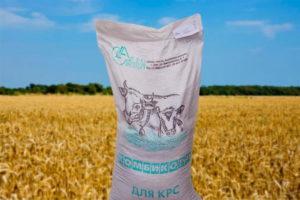 Коровы - Использование рыжикового жмыха и бишофита  в рационах лактирующих коров - kormlenie