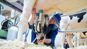 Коровы - Влияние селена на удои и качество молока коров - moloko