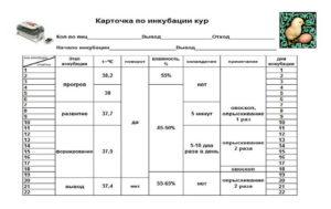Куры - Совершенствование методики определениятемпературы у цыплят - veterinarija