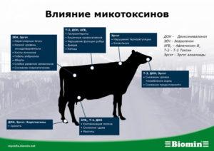 - Определение токсичности кормов как факторуспешного развития животноводства - veterinarija