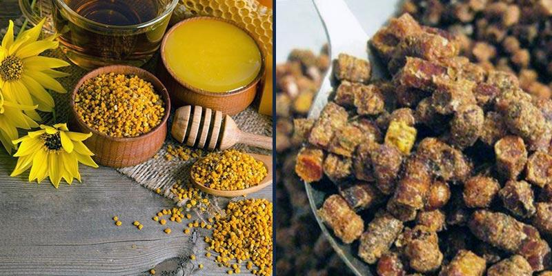 - Лечебные свойства пчелиной перги - pchelovodstvo