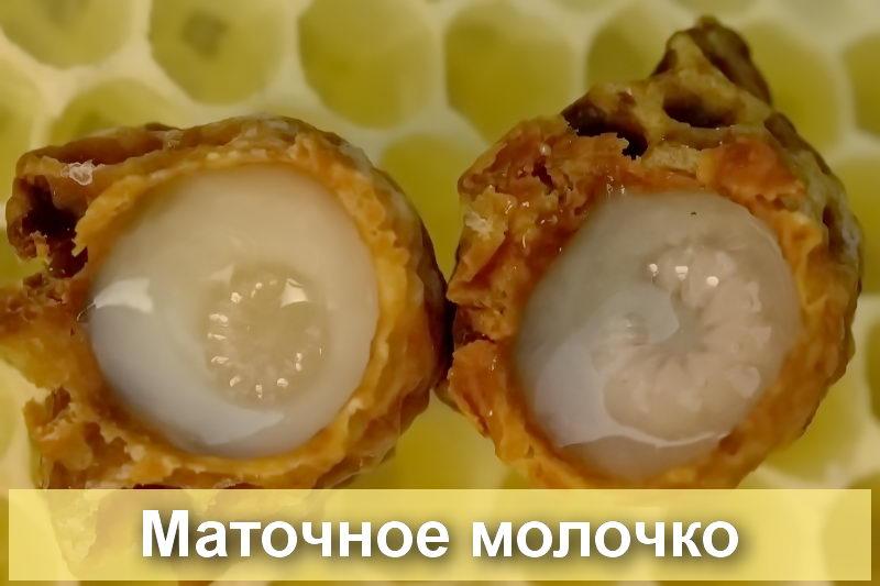 - Чем полезно пчелиное маточное молочко - pchelovodstvo