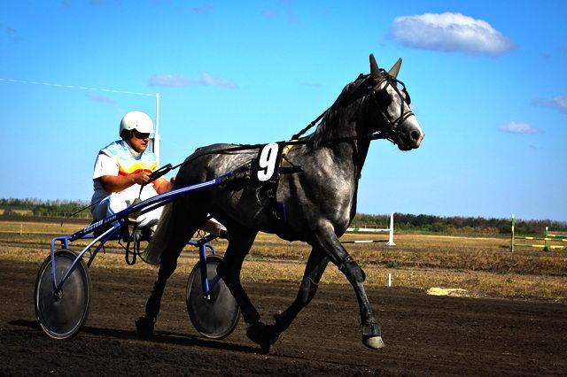 Лошади - Породы лошадей с фото и описанием - porodi