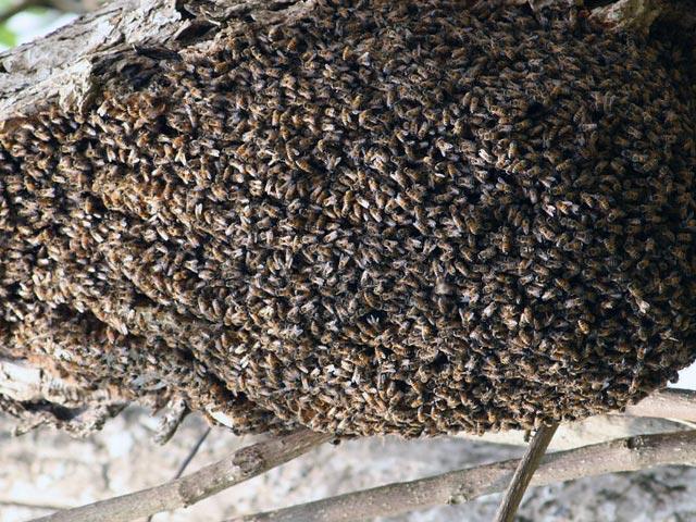- Начинающему пчеловоду - pchelovodstvo