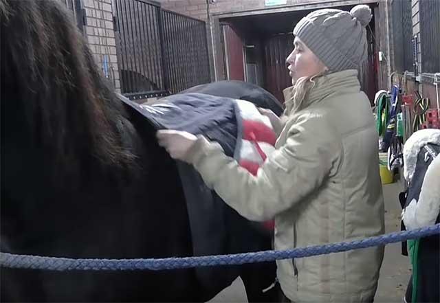 - Правила седловки лошади - uhod-za-zhivotnymi
