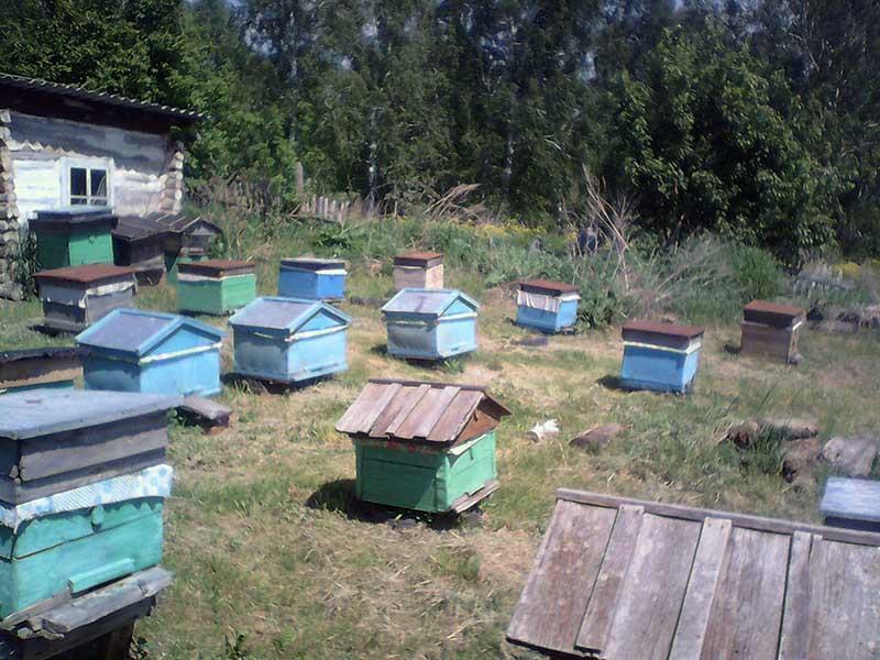 - Пчеловодство: основы работы на пасеке - pchelovodstvo