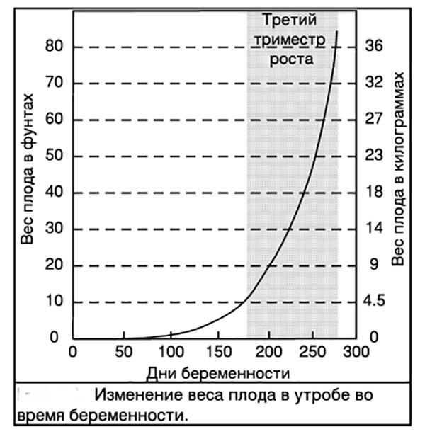 Коровы - Стельность: как протекает беременность коровы - stelnost-i-otel, razvedenie, interesnoe