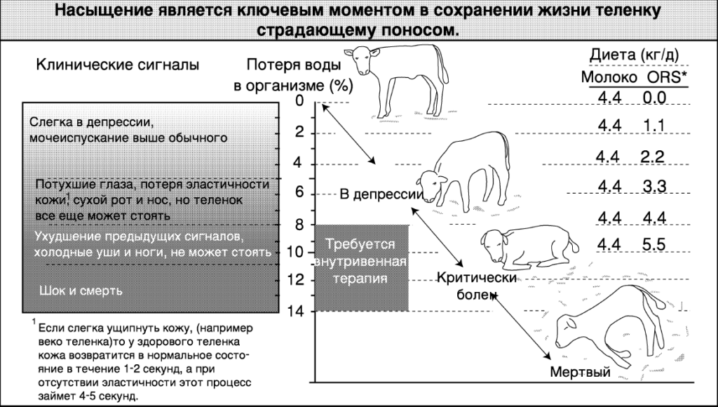 Телята - Понос у телят: лечение и профилактика диспепсии - veterinarija