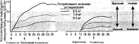 Телята, Коровы - Выпойка телят молозивом: когда и сколько - stelnost-i-otel, kormlenie-i-ratsiony-dlya-krs