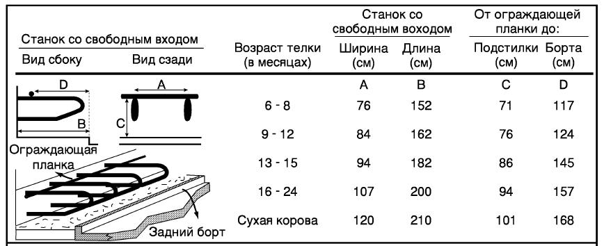 Телята, Коровы - Содержание телят в возрасте от 6 месяцев до года - soderjanie